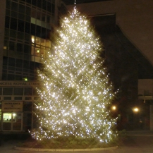 20ft tree