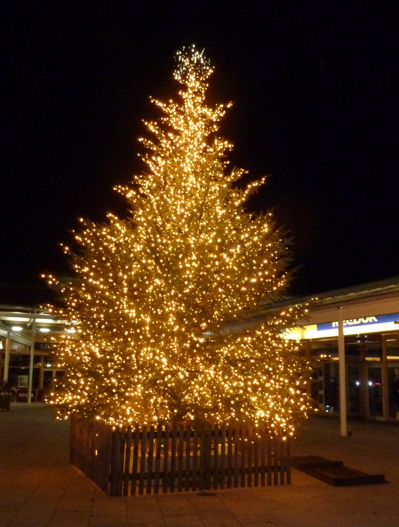 Large fresh tree with commercial grade lights