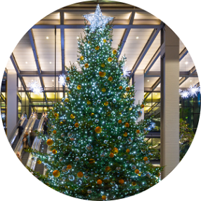 large commercial Christmas trees